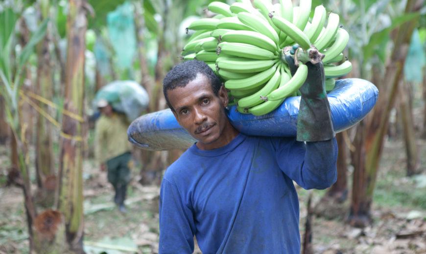 2020_Banana_Ecuador_870