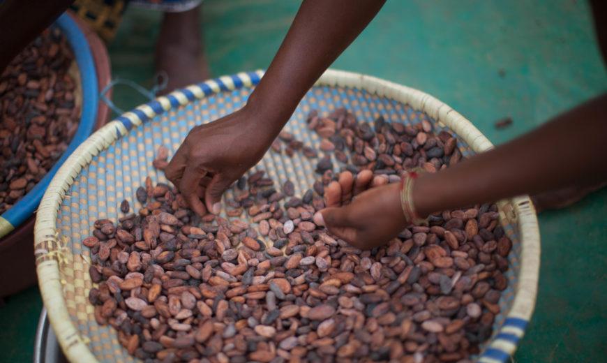 cocoa-ivory-coast