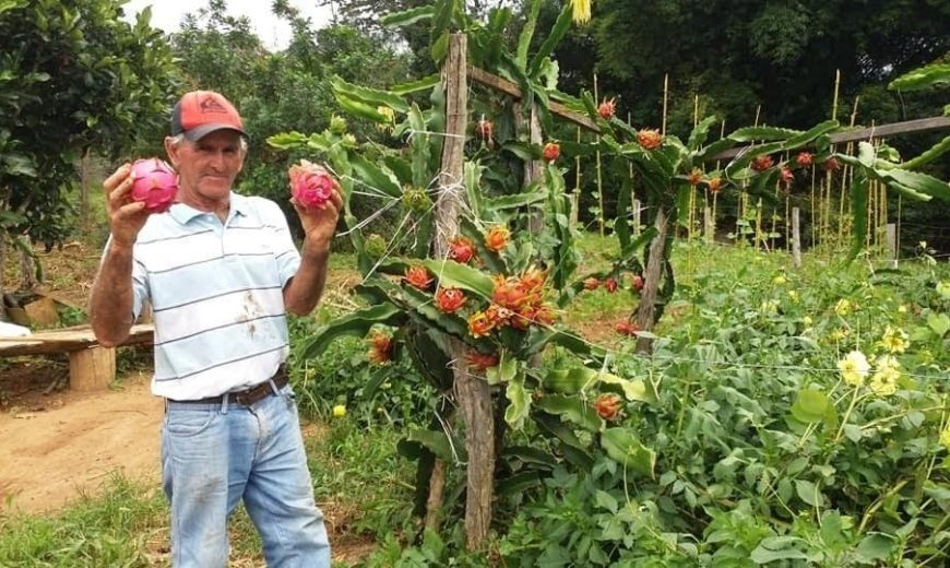 Solidarity Garden Project in Brazil benefiting communities around the area