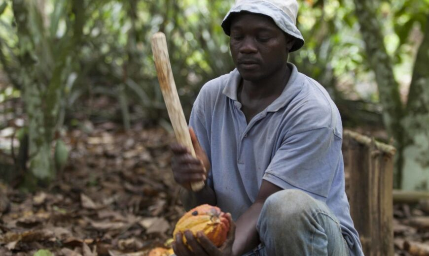 Benjamin Ouedraogo breaks open cocoa pod by Simon Rawles