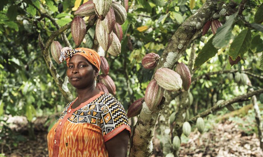 Cocoa ECAKOOG Ivory Coast 2020