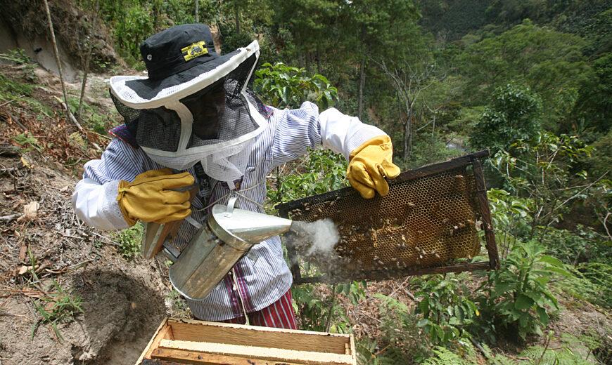 Fairtrade Honey - ACODIHUE