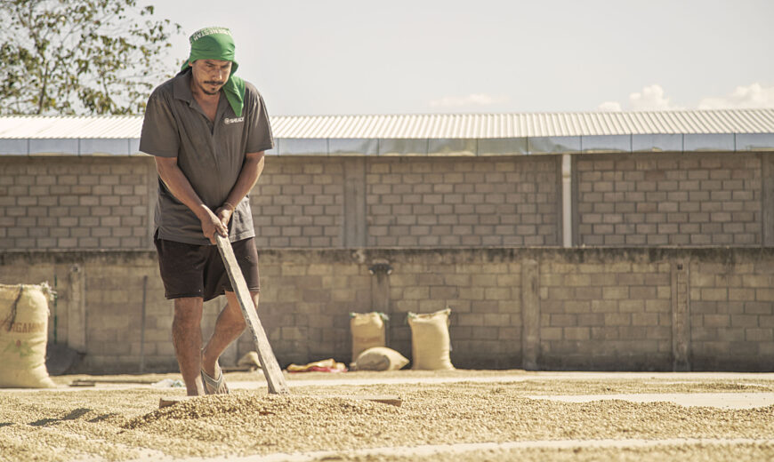 Coffee drying at Finca Triunfo Verde Sociedad Civil, Mexico