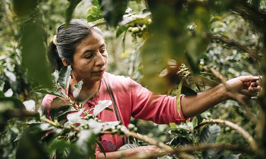 Coffee CENFROCAFE Peru 2020