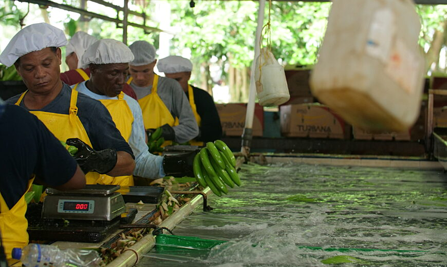 Workers at the Fairtrade certified Agrotes SAS banana farm in Urabá, Colombia.