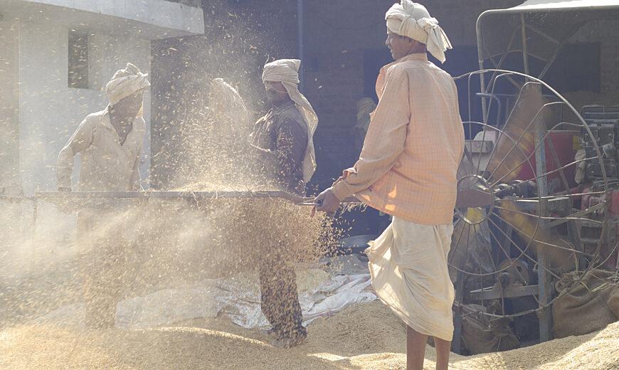 Roorkee Sunstar rice