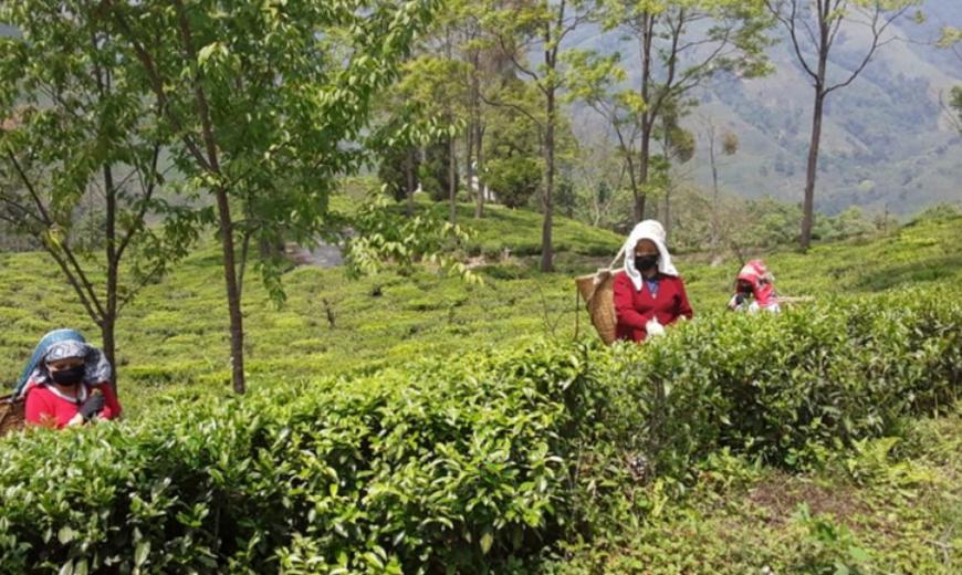 Teaproducers
