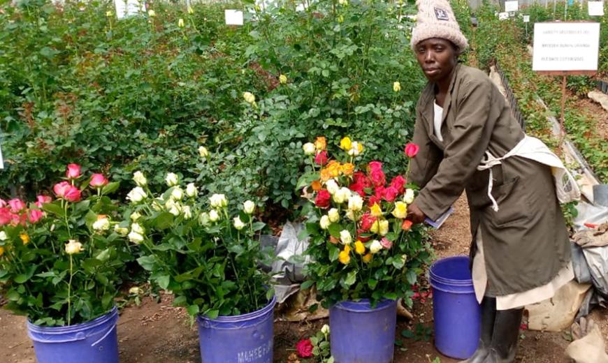 Jackline, a  Flower Producer in Kenya