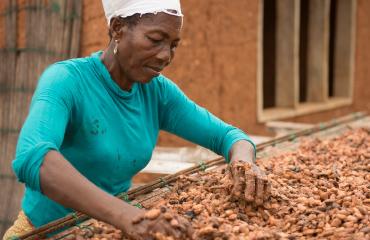 Woman sorting Cocoa