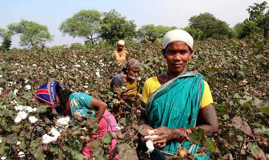 11395 Cottonfarmersindia 870