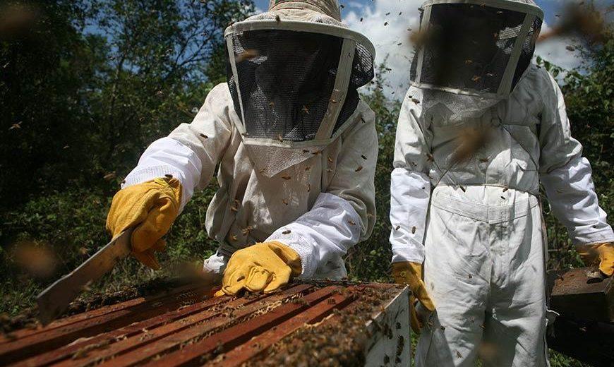 15368 Beekeepershoneyguatemala 870