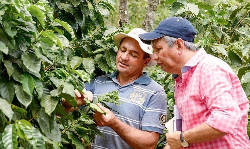17586 Auditor Coffee Farmer Leaves 870