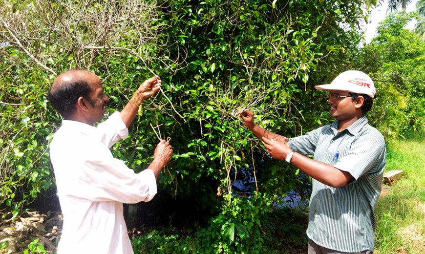 2014 Sunny Babu plant doctor 870
