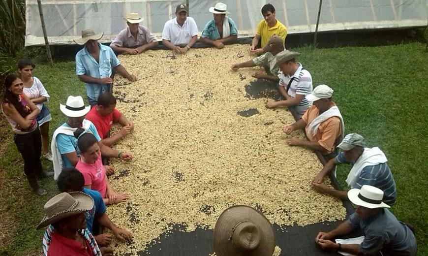 2015 Coop Cafe Antioquia 870