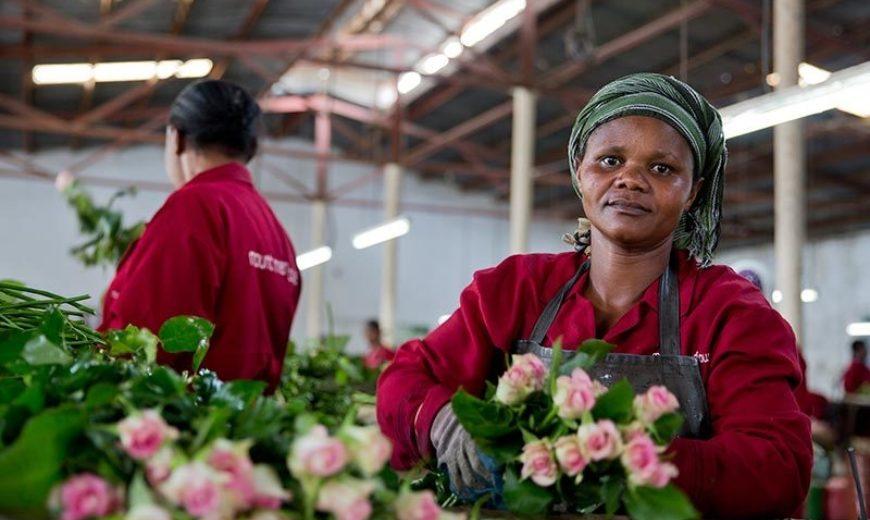 2019 6 Flowers Mount Meru Zuhura 800