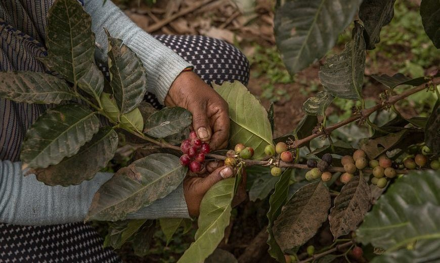 2020 Coffee Living Income 870