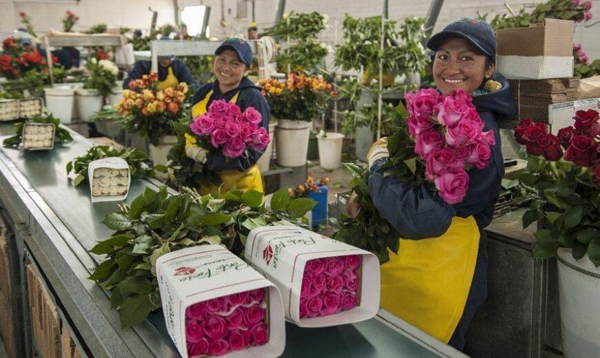 2020 flower workers Ponte Tresa Ecuador 850