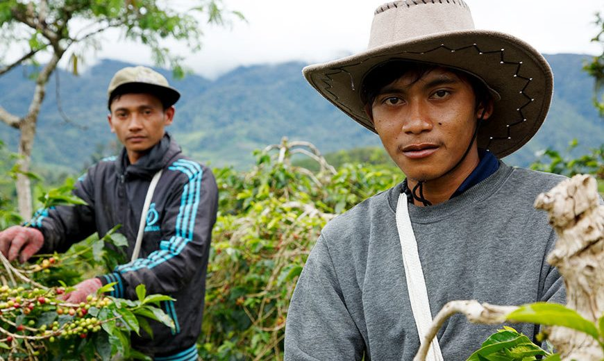 20424 Two Coffee Farmers Indonesia 870
