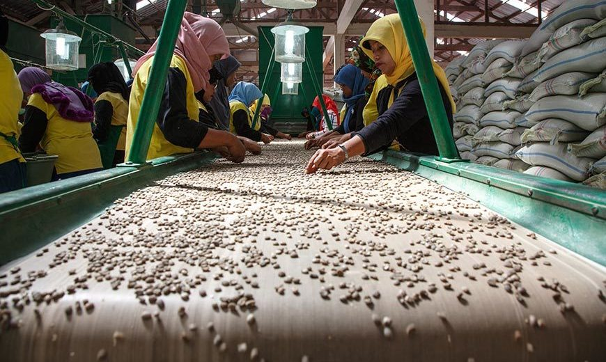 20569 Quality Control Coffee Indonesia 870
