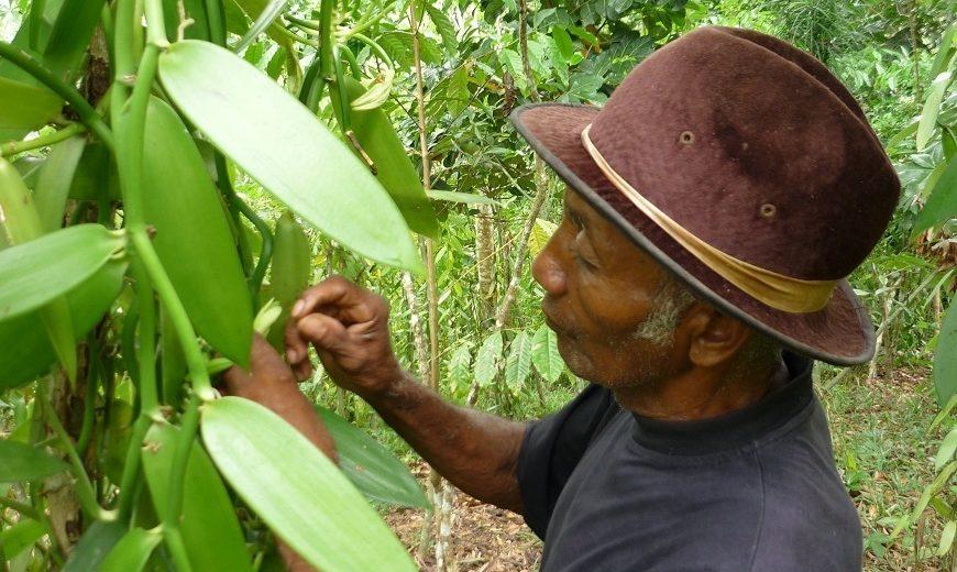 2130 vanilla farmer pollinating 870