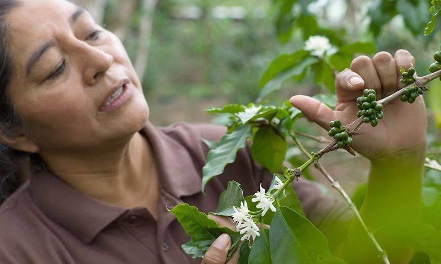 21639 Honduras Coffee Farmer 870