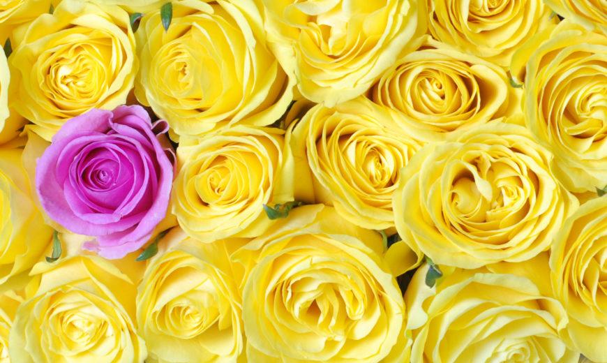 Fairtrade yellow roses