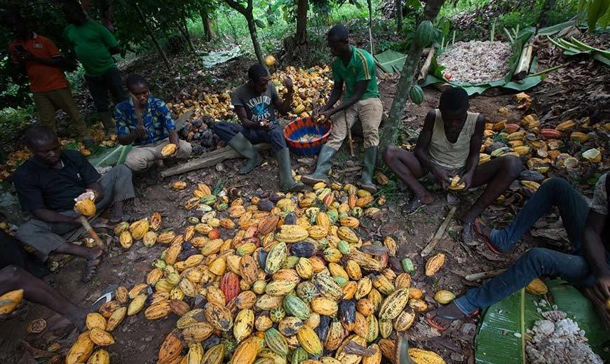 26470 Cocoa Processing Group Ivory Coast 870
