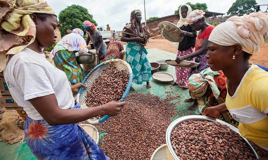 26491 Women Sorting Cocoa 870