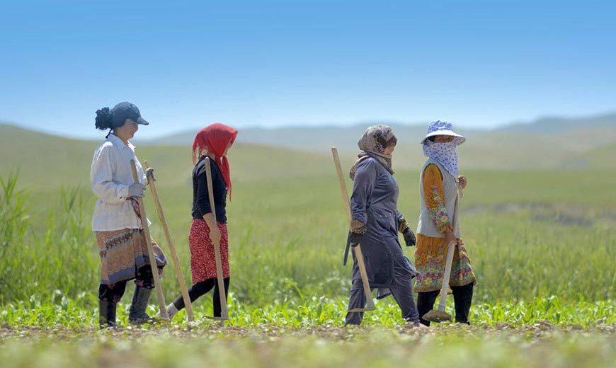 27149 Four Women Farmers Walking 870