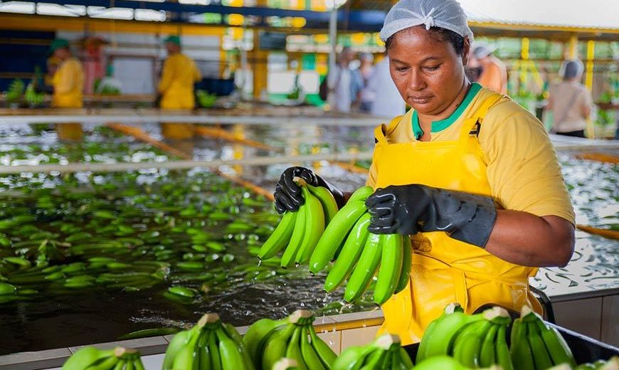 27394 Washing Bananas Colombia 870