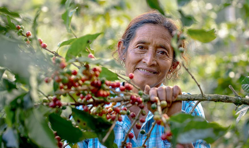 27521 Coffee Farmer Smiling Guatemala 870