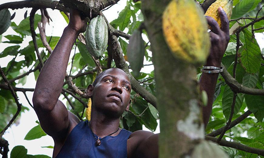 443 Conacado Cocoa Farmer 870