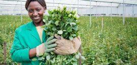 Monicah is a flower worker at Oserian in Kenya.