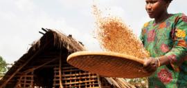 Fairtrade certified cooperative ECOJAD, member of Ecookim, in Dalao, Côte d'Ivoire.