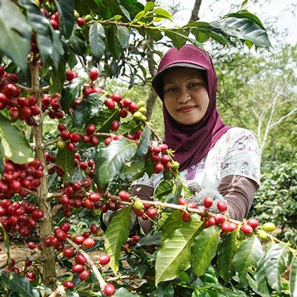 20601 Coffeefarmerpremiumindonesia 425