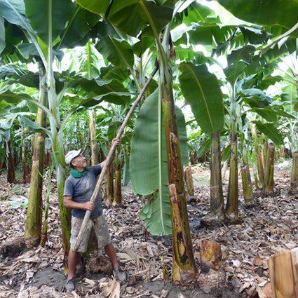 Kaufland Climate Felisandro Peru 425