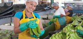 Womanbananaworker 20309 570