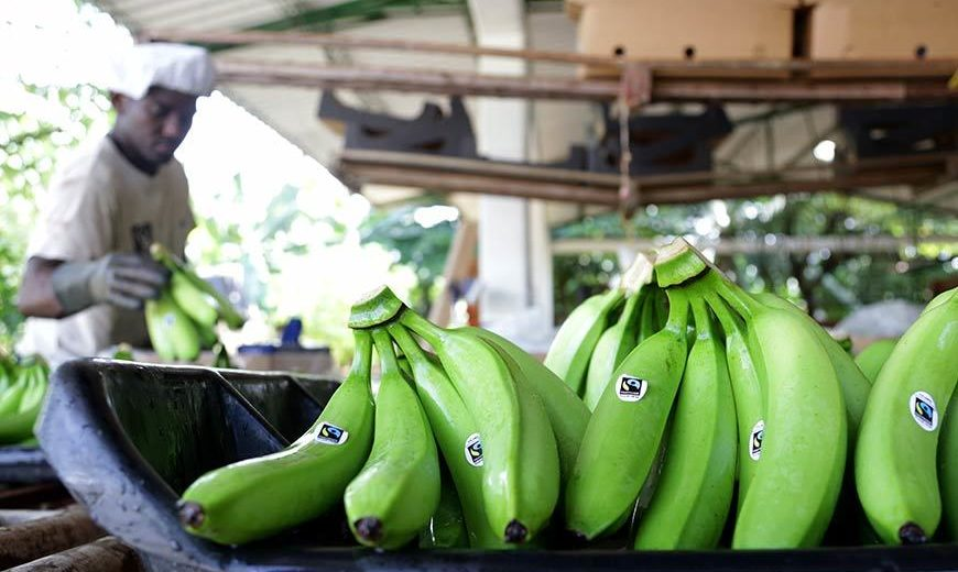 22477 Adding Fairtrade Mark Bananas 870