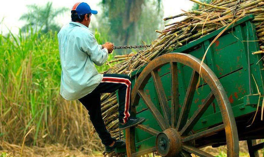 484 Sugar Cane Cart 870