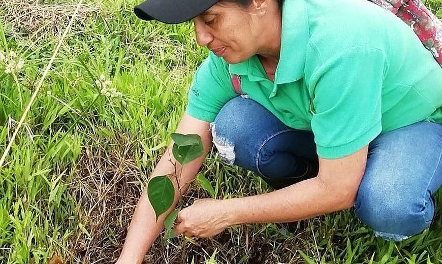 COOBANA woman planting 870