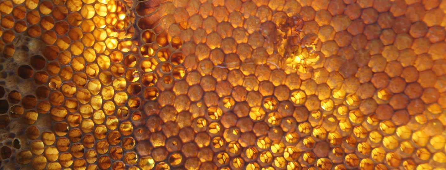 Image of a honeycomb