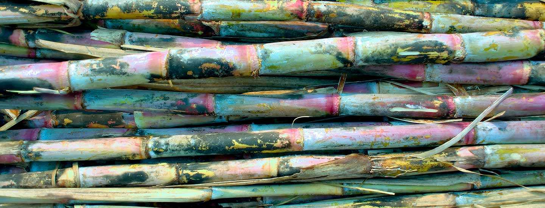 Image of sugarcane